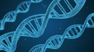 genes influence academic success
